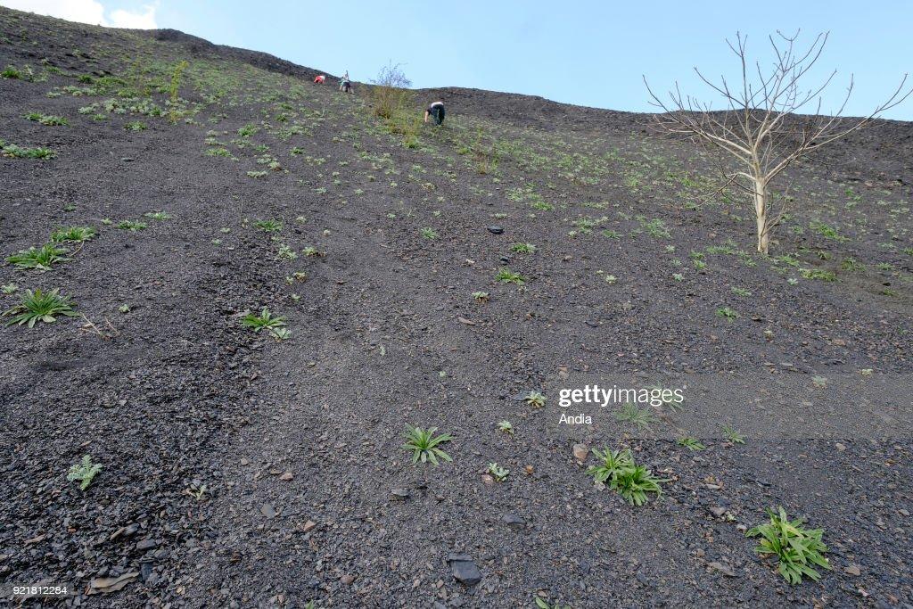 Slag heap of the pit of Sainte-Henriette. : News Photo