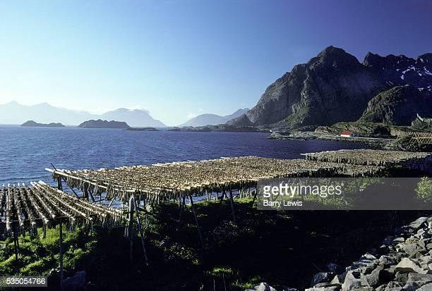 Henningsvar, a fishing village on the Lofoten Islands. For more than a century, the coastal steamer Hurtigruten has been the lifeline linking the...