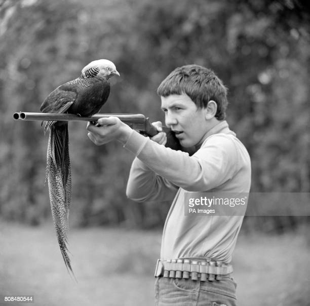 'Henry' the friendly Pheasant has a favourite pastime Going shooting When schoolboy Richard Page of Clive Shropshire goes out with a shotgun Henry...