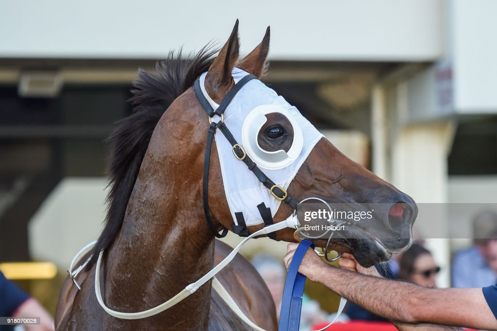 Heptagon (NZ) after winning the Ladbrokes Handicap at Ladbrokes Park Lakeside Racecourse on February 14, 2018 in Springvale, Australia.