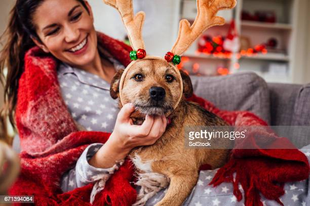 her dog loves christmas - christmas dog stock pictures, royalty-free photos & images