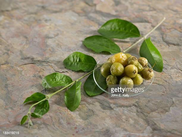 Herb Acerola Leaves and Berries