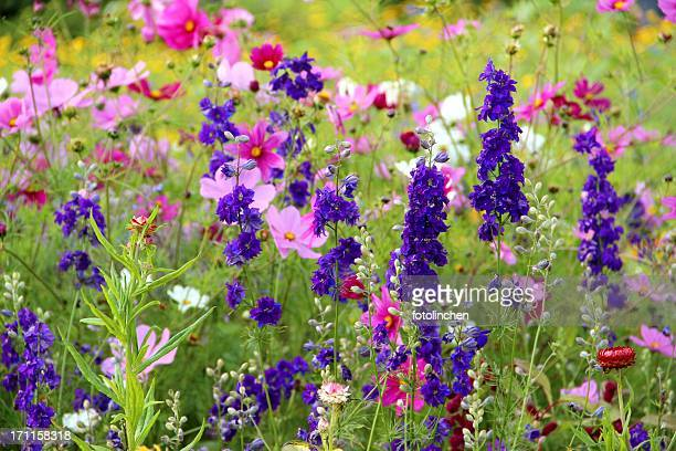 herb and flower garden - wildflower stock pictures, royalty-free photos & images