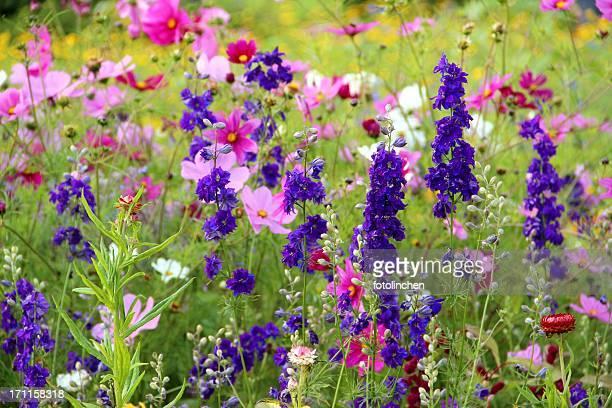 Giardino di erbe e fiori