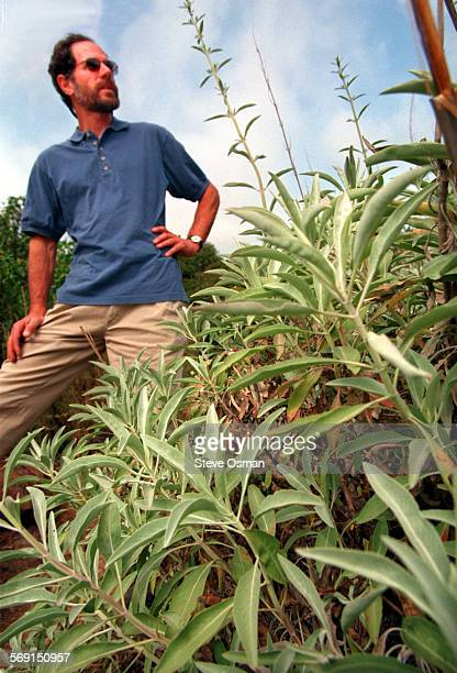 Herb expert Lanny Kaufer stand next to a White Sage plant along a trail behind Thacher School in Ojai White Sage has been used to allieviate hot...