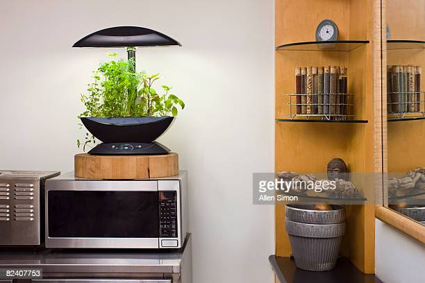 Herb garden in kitchen of New York City apartment