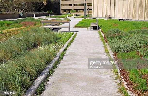 Herb Garden on Roof Top