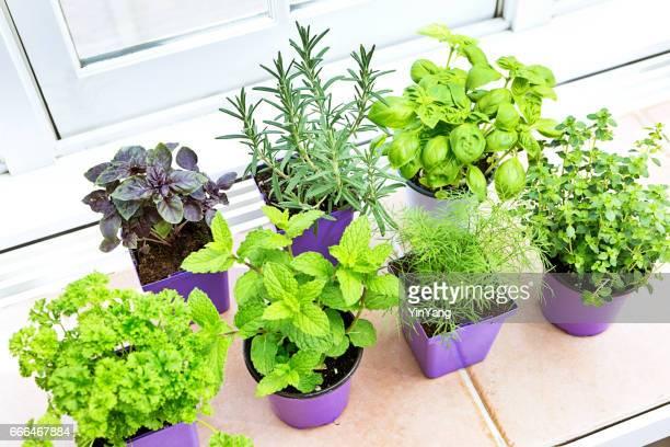 Jardín de hierbas plantas de semillero en envases por menor