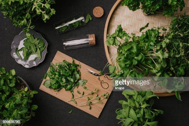 herb leaves fresh picked herbs saved and dried - herb stock pictures, royalty-free photos & images