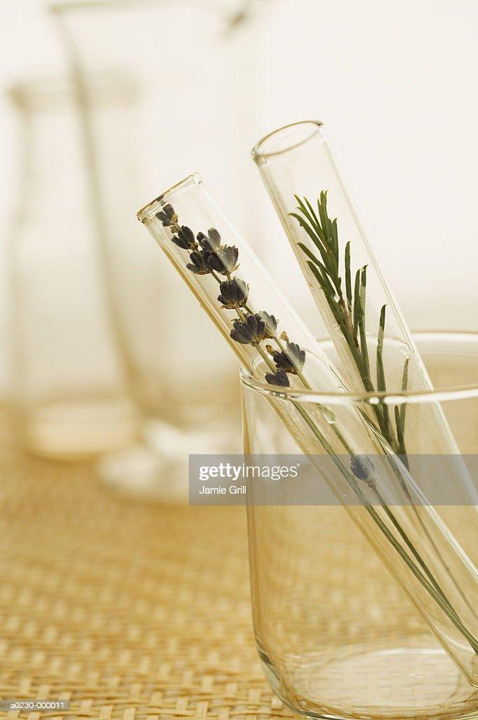 Herb Plants in Test Tubes : Foto de stock