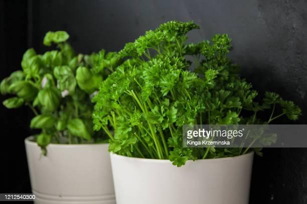 herb pots - peterselie stockfoto's en -beelden