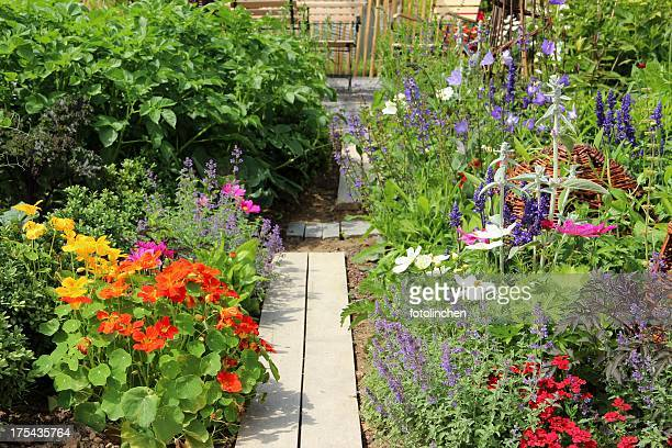 herb, vegetables and flower garden - nasturtium stock pictures, royalty-free photos & images