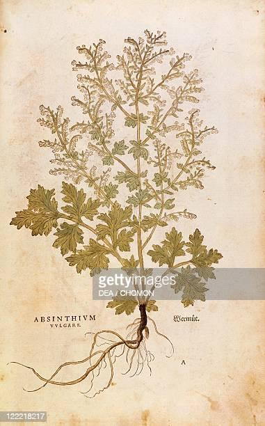 Herbal 16th century Leonhart Fuchs De historia stirpium commentarii insignes 1542 Plate Wormwood Artemisia absinthium Colored engraving