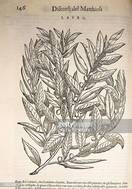 Herbal 16th century Pier Andrea Mattioli Commentary on Dioscorides' work 1554 Volume I Book I Plate Lauro Engraving Published by Felice Valgrisio...