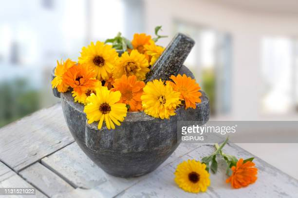 Herbal flower of calendula Officinalis in wooden mortar Isolated