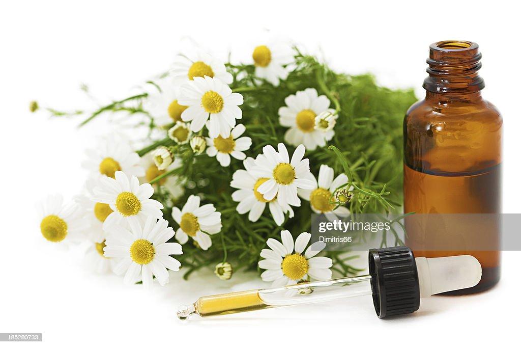 Herbal Medicine: Chamomile : Stock Photo