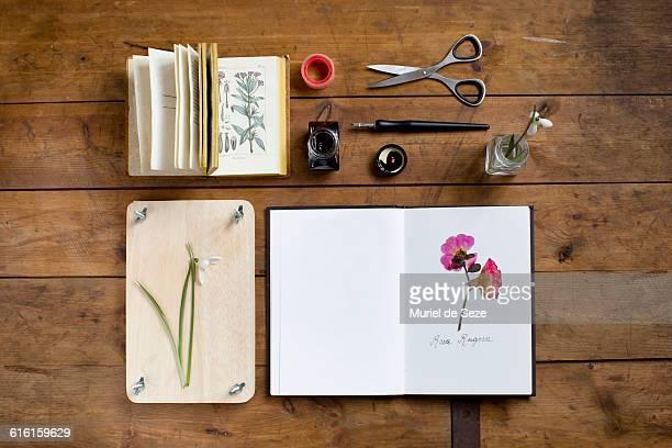 herbarium - botánica fotografías e imágenes de stock