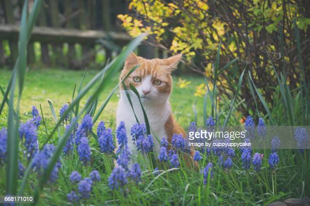 herbie in the grapes - grape hyacinth stock pictures, royalty-free photos & images