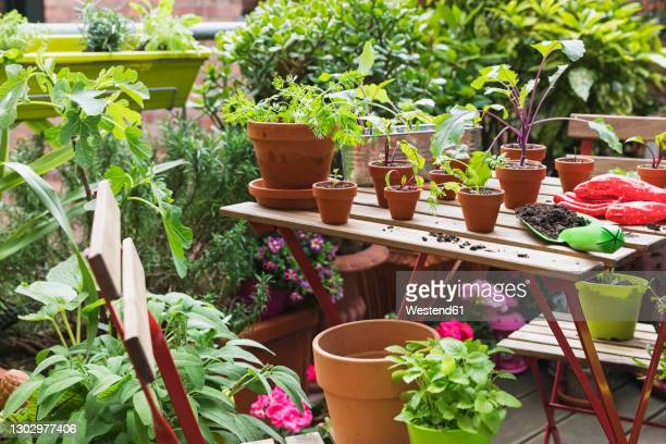 herbs and vegetables cultivated on balcony garden - plant pot stock pictures, royalty-free photos & images