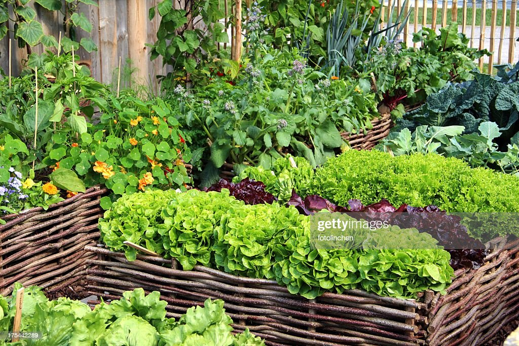Herbs and vegetables : Stock Photo