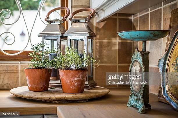 Herbs grow in terracotta pots on the counter of a country style kitchen. Cape Town, Western Cape, South Africa.