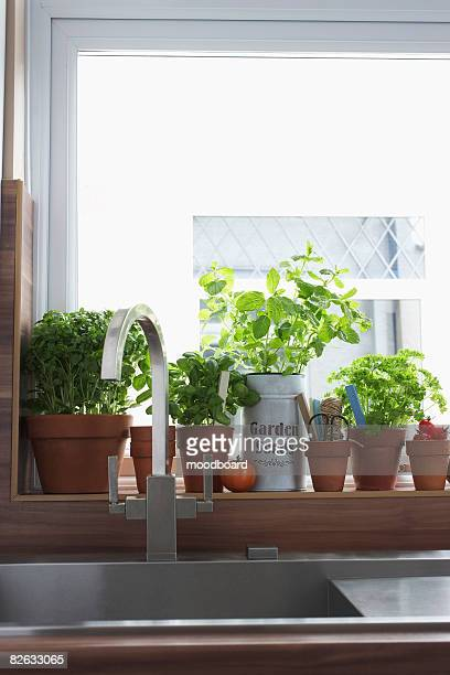 herbs growing in flowerpots at kitchen sink - ledge stock pictures, royalty-free photos & images