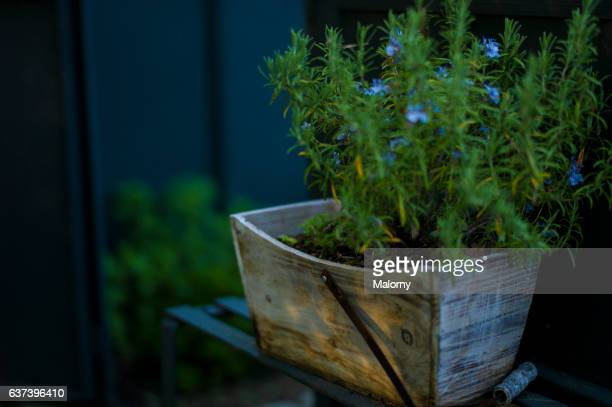 Herbs growing in wooden box