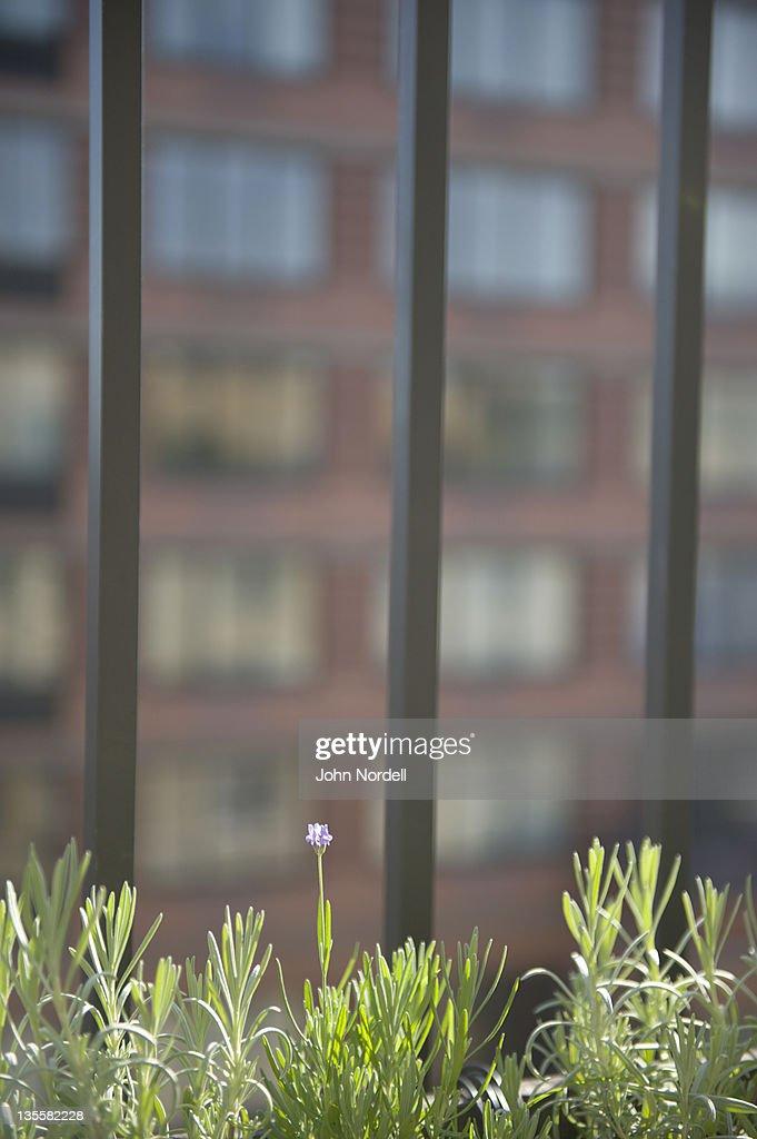 Herbs growing on terrace : Stock Photo