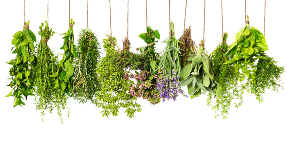 herbs hanging isolated on white. food ingredients 481331541
