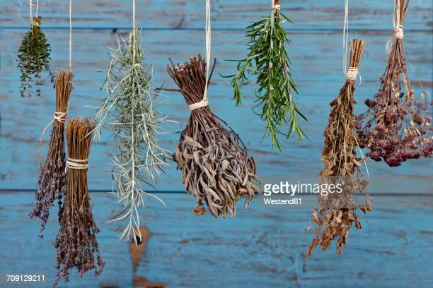 herbs hanging out to dry - drying stock pictures, royalty-free photos & images