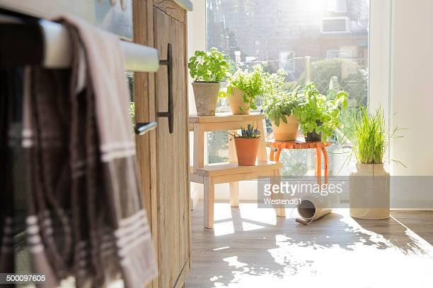 herbs in flowerpots at the kitchen window - erbe aromatiche foto e immagini stock