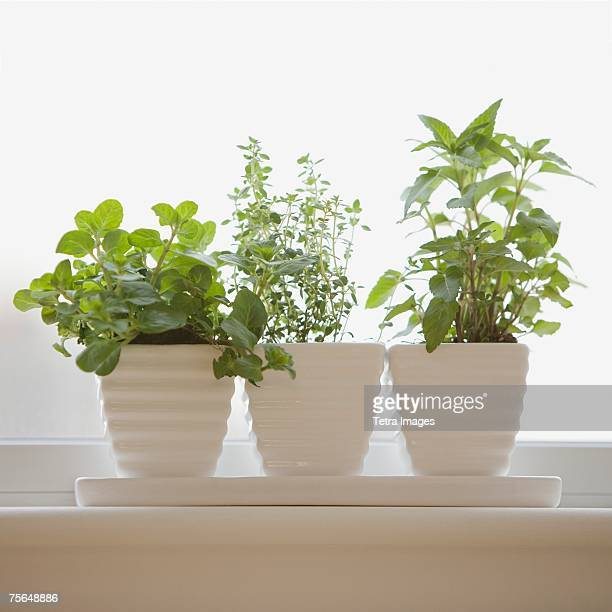 herbs in pots on windowsill - herbs stock photos and pictures