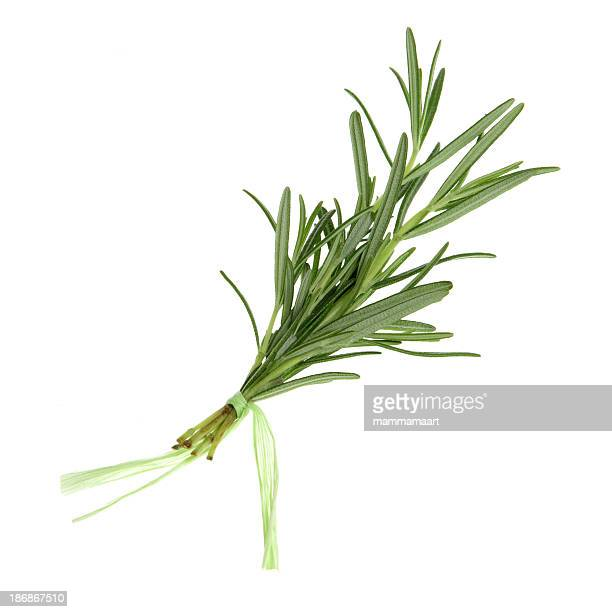 Herbs, Isolated - Rosemary