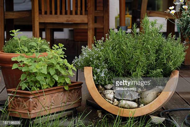 herbs on the patio