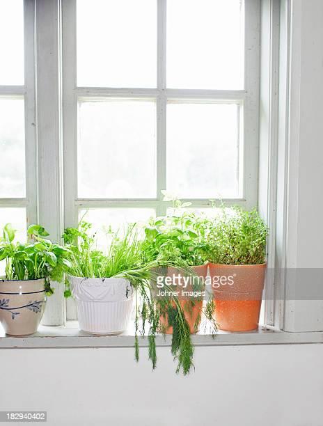 Herbs on window sill