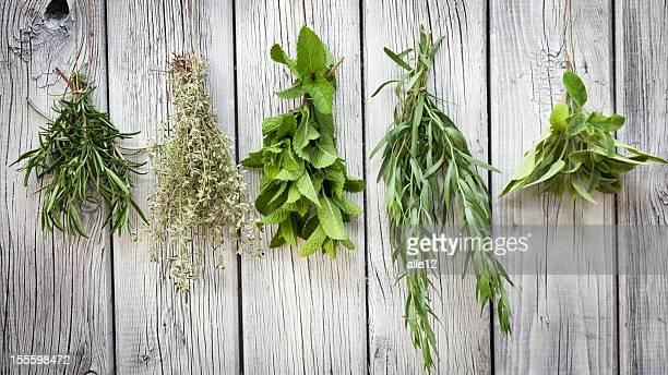 erbe aromatiche - erbe aromatiche foto e immagini stock