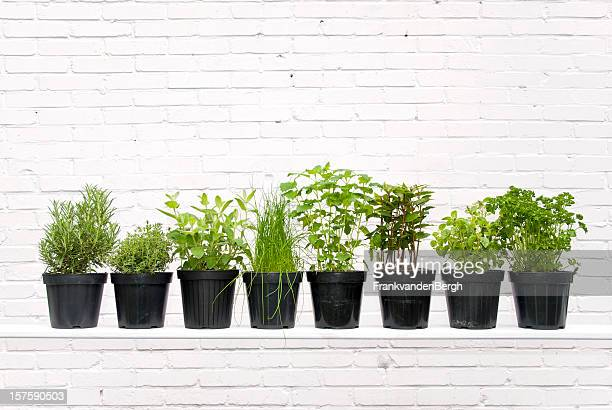 herbs - flower pot stock pictures, royalty-free photos & images