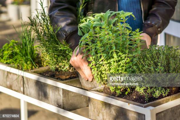 herbs - gesunder lebensstil stock pictures, royalty-free photos & images