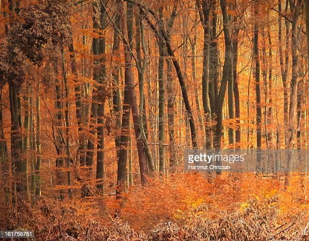 CONTENT] Herbst im Wald von Rotenberg / Stuttgart Seen in Rotenberg / Stuttgart / Germany