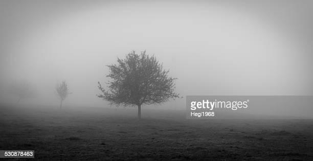 Herbst - Nebel