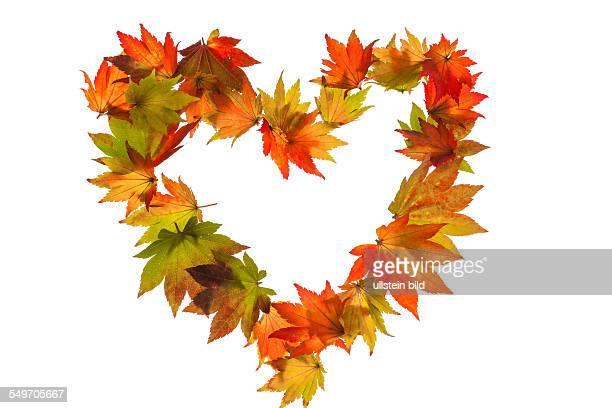 Herbstbild Blätter auf weißem Hintergrund in Herzform Symbolfoto für LIebe