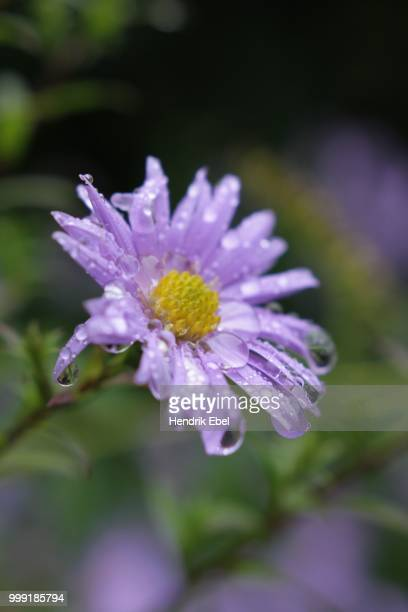 Herbstblumen Stock Photos And Pictures