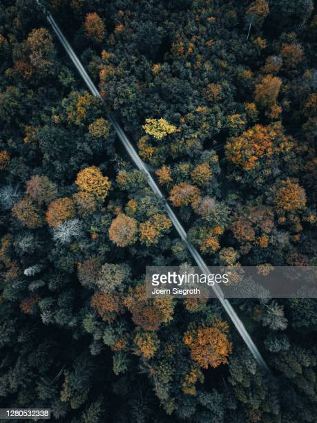 herbstwald von oben - high scale magnification stock pictures, royalty-free photos & images