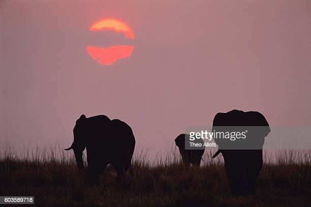 herd of african elephants at sunset, kenya - endopack stock pictures, royalty-free photos & images