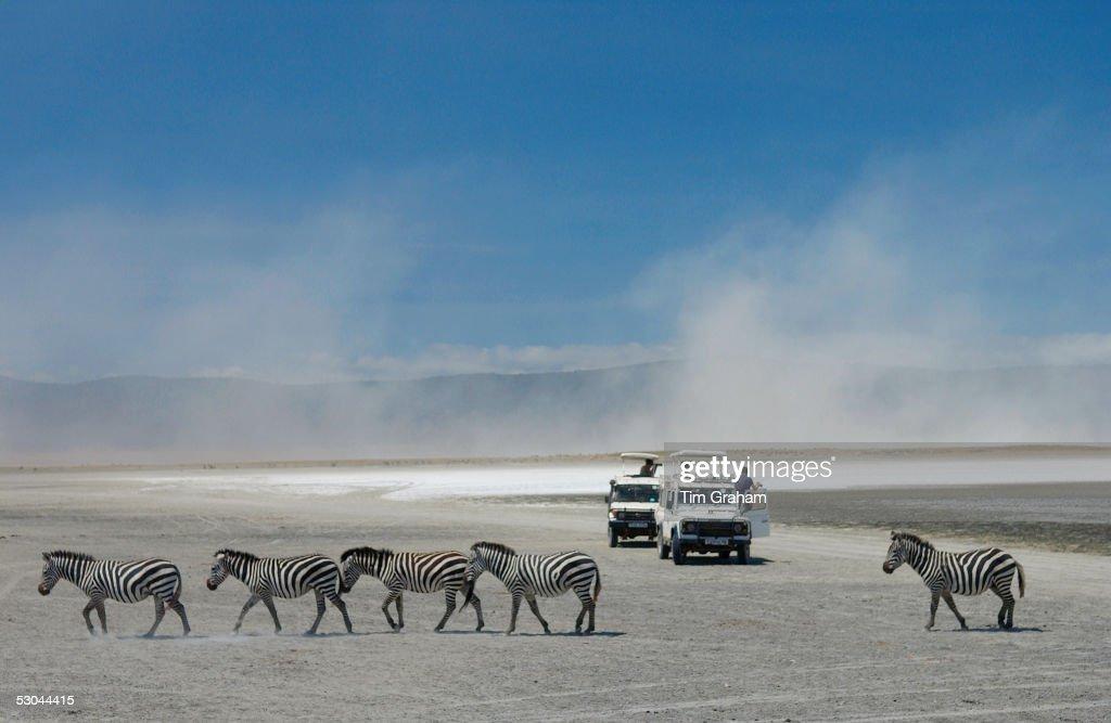 Zebra, Ngorongoro, Tanzania : News Photo