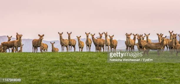 herd of deer on grass against clear sky - wildlife stock pictures, royalty-free photos & images