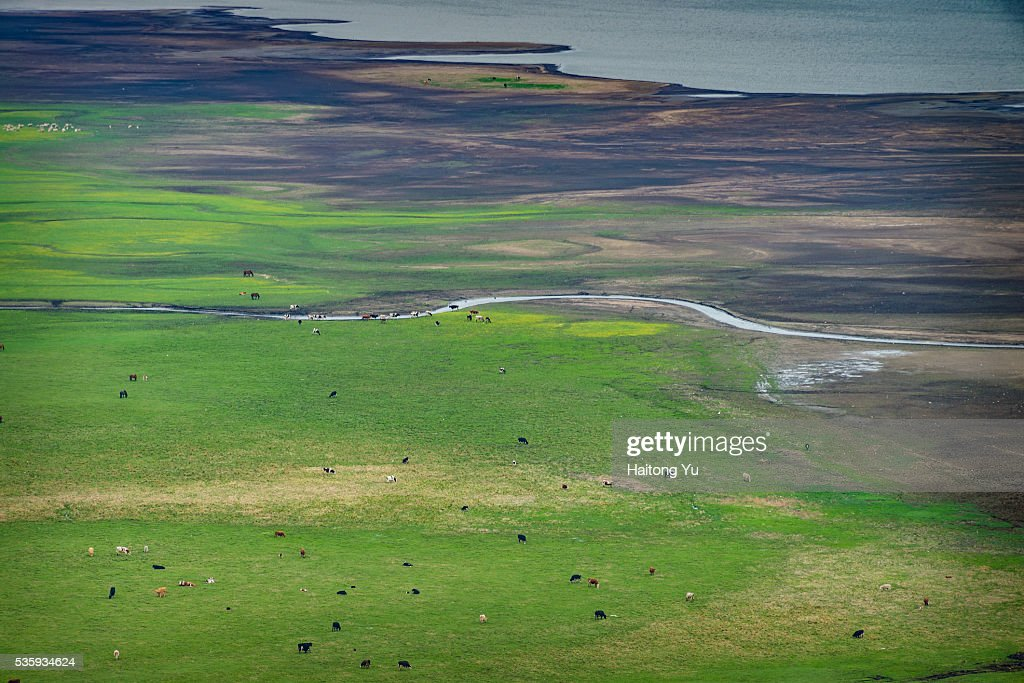 Herd of domestic animals around winding rivers : Stock Photo