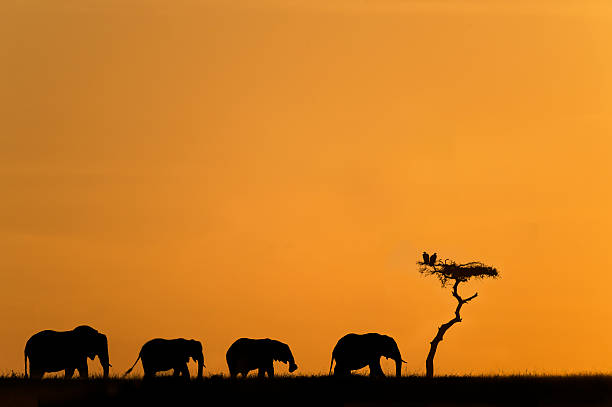Herd Of Elephants And Vultures At Sunrise Wall Art