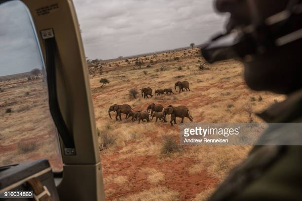 A herd of elephants are seen from a Kenya Wildlife Service helicopter during an elephant collaring operation on February 3 2018 in Tsavo East...