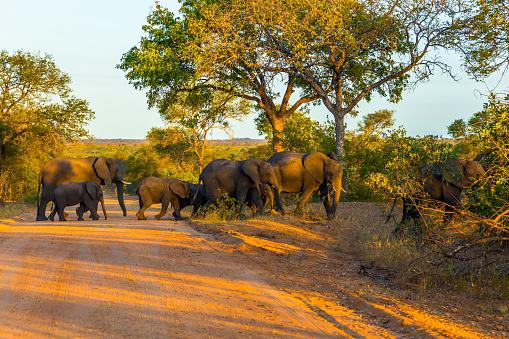 Herd of elephants crosses the road 1221243569